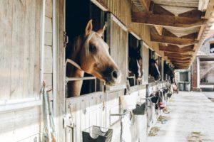 Running an equine business