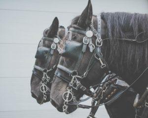 Equine business